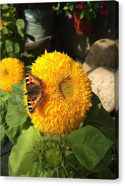 Canvas Print - Sunflower And Butterfly by Christine Rivers