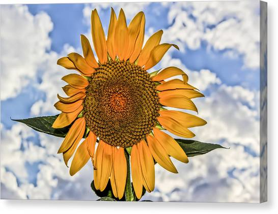 00008 Sunflower And Clouds Canvas Print