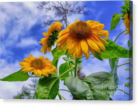 Sunflower Art Canvas Print by George Paris