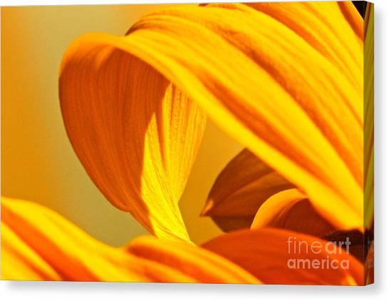 Sunflower Curve Canvas Print