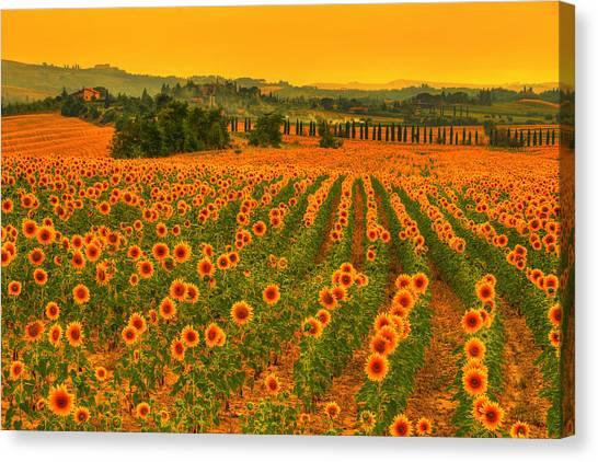 Sunflower Dream Canvas Print