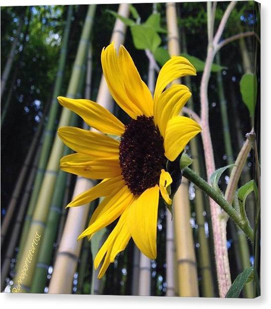 Geese Canvas Print - Sunflower In A Bamboo Forest by Anna Porter
