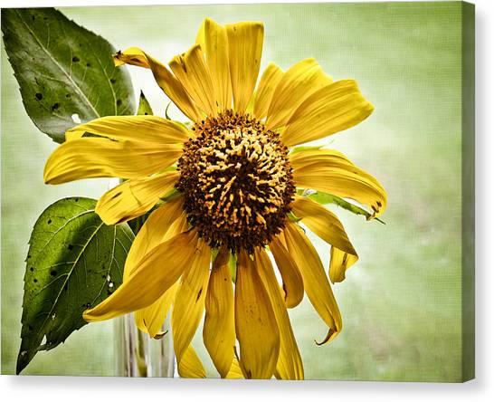 Sunflower In Window Canvas Print
