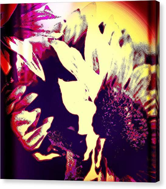 Botanical Canvas Print - Sunflower by Jason Michael Roust
