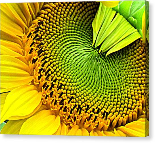 Kaleidescope Sunflower Canvas Print