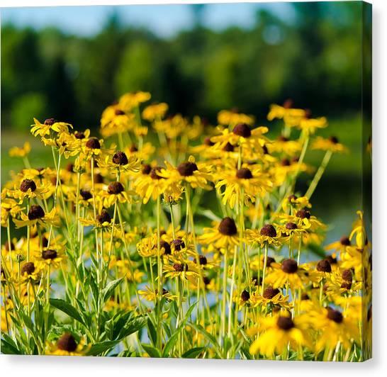 Sunflower Patch Canvas Print by John Ullrick
