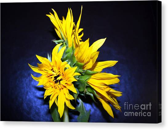 Sunflower Portrait Canvas Print