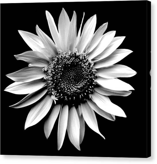 'sunflower Portrait' Canvas Print