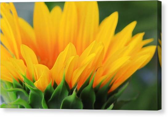 Sunflower Profile Canvas Print