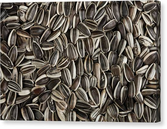 Sunflower Seeds Canvas Print - Sunflower Seeds by Pascal Goetgheluck/science Photo Library