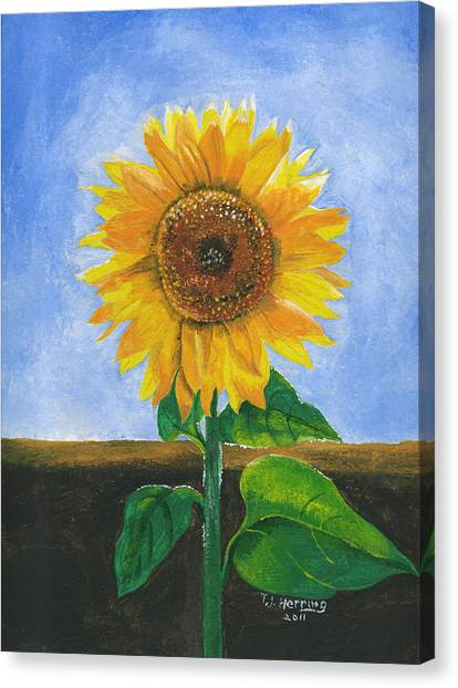 Sunflower Series Two Canvas Print