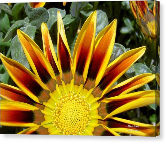 Sunflower Smiling Limited Edition Canvas Print