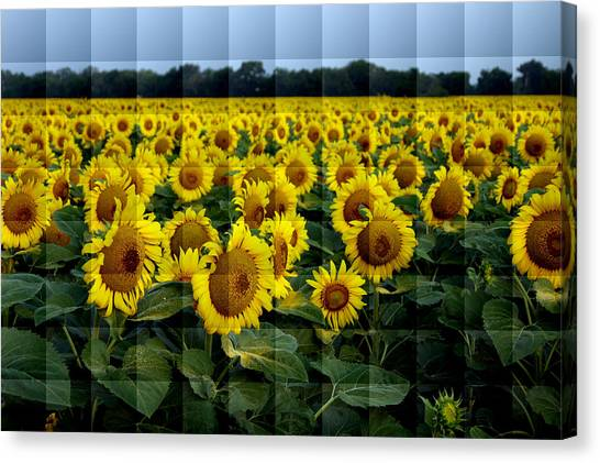 Sunflower Squared Canvas Print