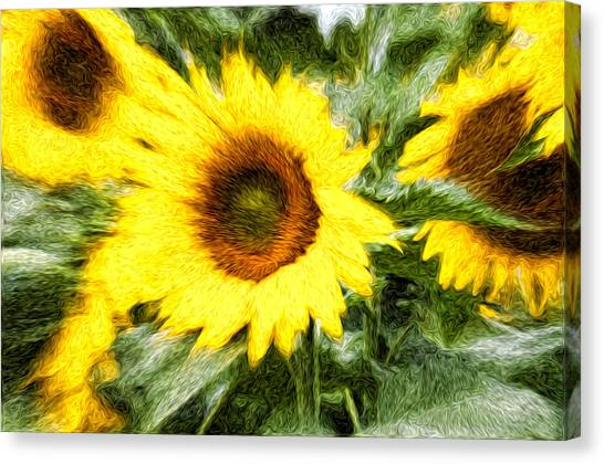 Sunflower Study 3 Canvas Print by Mitchell Brown