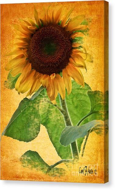 Sunny Sunflower Canvas Print