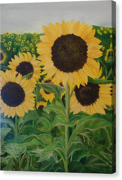 Sunflower Trail Canvas Print by Shiana Canatella