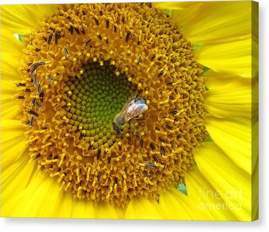 Sunflower Visitor Series 2 Canvas Print