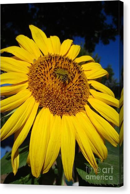 Sunflower Visitor Series 3 Canvas Print