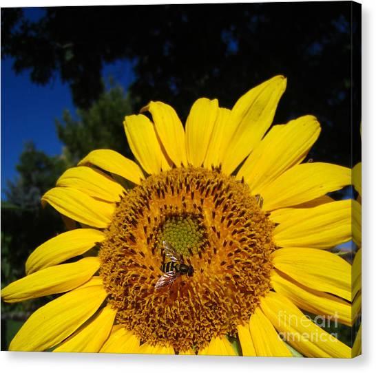 Sunflower Visitor Series 4 Canvas Print