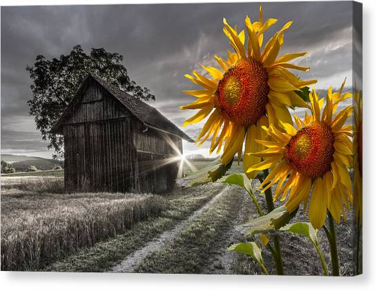 Prairie Sunrises Canvas Print - Sunflower Watch by Debra and Dave Vanderlaan