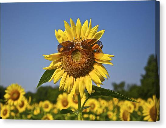 Sunflower With Sunglasses Canvas Print