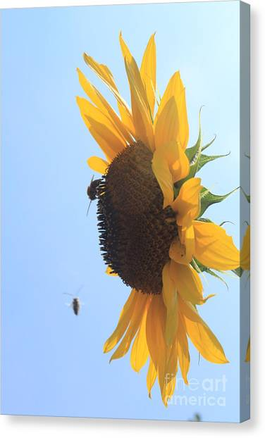 Canvas Print - Sunflower With Visitors by Lotus