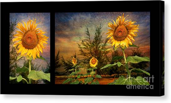Sunflower Seeds Canvas Print - Sunflowers by Adrian Evans
