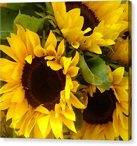 Sunflowers Canvas Print - Sunflowers by Amy Vangsgard