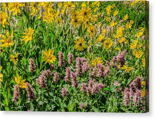 Sunflowers And Horsemint Canvas Print