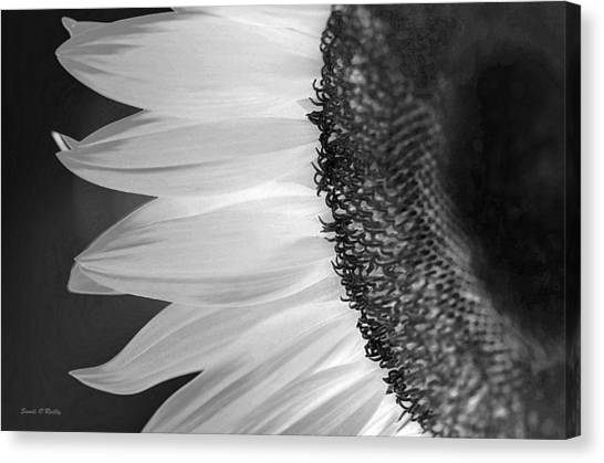 Sunflowers Beauty Black And White Canvas Print