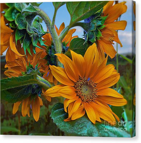 Sunflowers In A Bunch Canvas Print