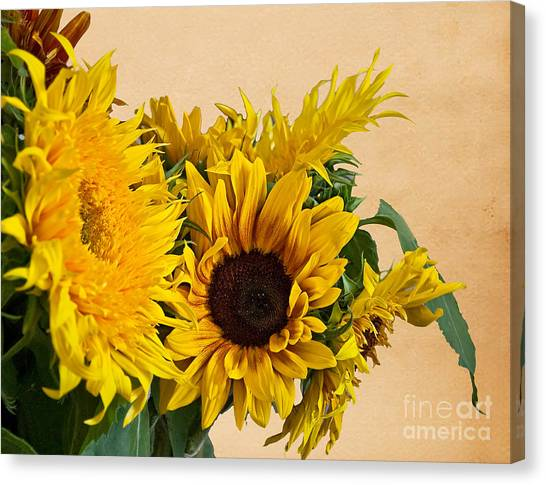 Sunflowers On Old Paper Background Art Prints Canvas Print