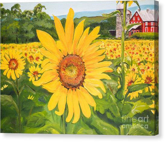 Sunflowers - Red Barn - Pennsylvania Canvas Print