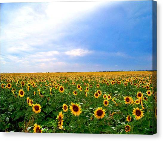 Sunflowers Canvas Print by Thomas Leon