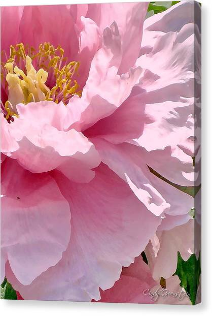 Sunkissed Peonies 1 Canvas Print