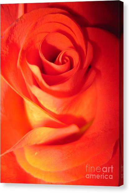 Sunkissed Orange Rose 10 Canvas Print