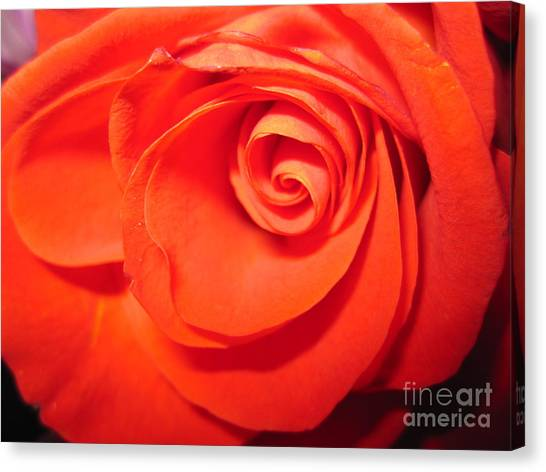 Sunkissed Orange Rose 9 Canvas Print