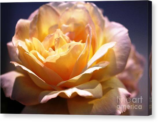 Sunkissed Rose Canvas Print by Judy Palkimas