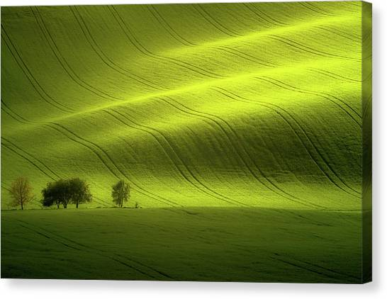 Rolling Hills Canvas Print - Sunlight by Peter Banny