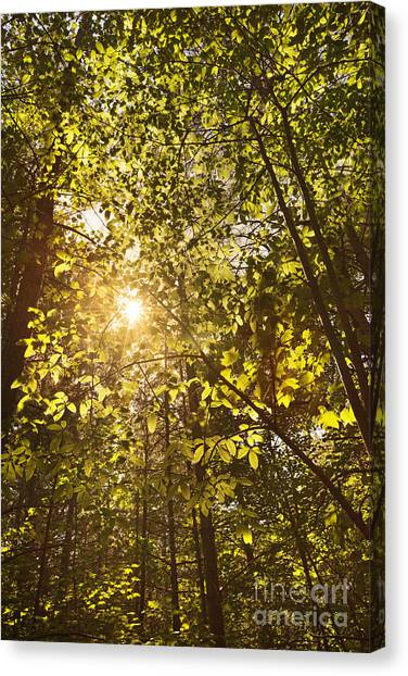 Sunlight Shining Through A Forest Canopy Canvas Print by Jonathan Welch
