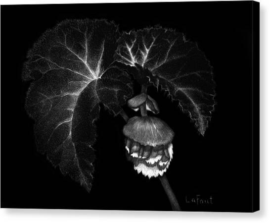 Sunlit Begonia Canvas Print