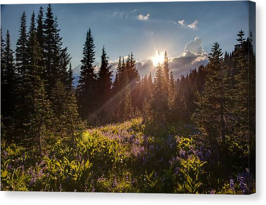 Mount Rainier Canvas Print - Sunlit Flower Meadows by Mike Reid