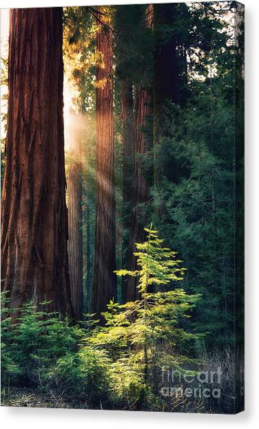 Ancient Art Canvas Print - Sunlit From Heaven by Jane Rix