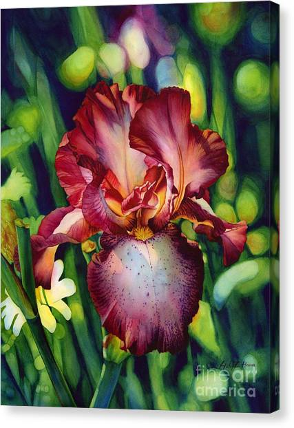 Sunlit Iris Canvas Print