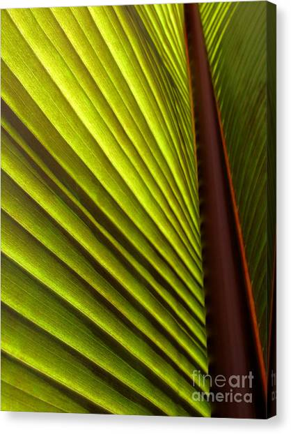 Sunlit Leaf Canvas Print