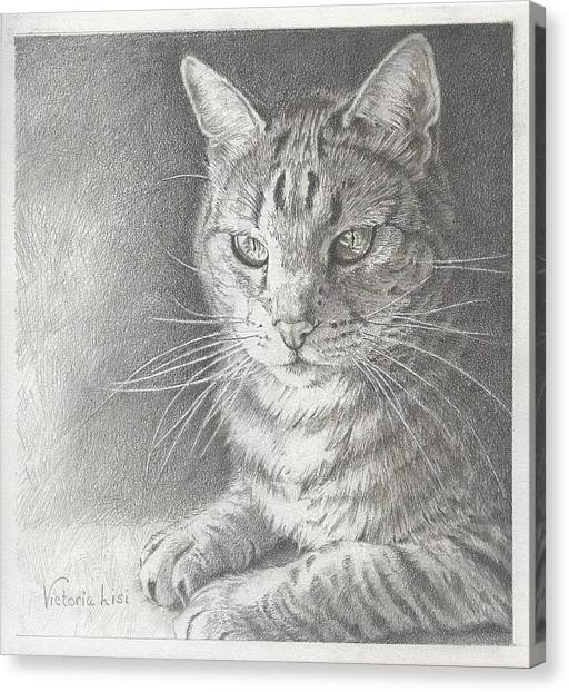 Sunlit Tabby Cat Canvas Print