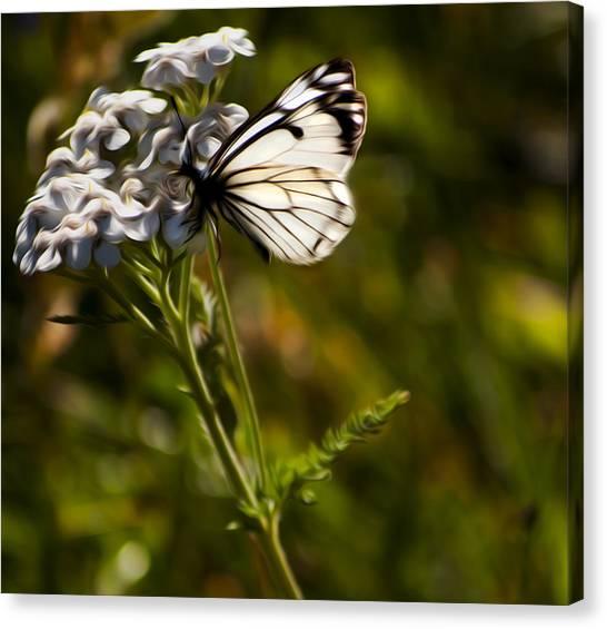 Sunlit Wings Canvas Print