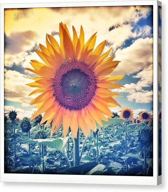 Farmers Canvas Print - Sunnie by Candace Fowler