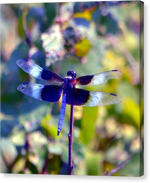 Missouri Whitetail Canvas Print - Sunning Dragonfly by Deena Stoddard