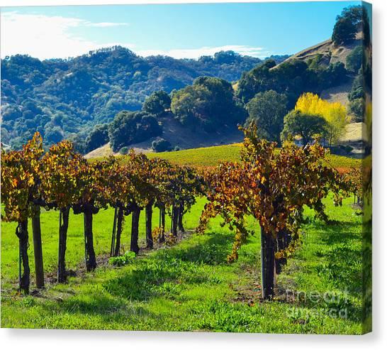 Sunny Autumn Vineyards Canvas Print
